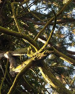 Tree Loop