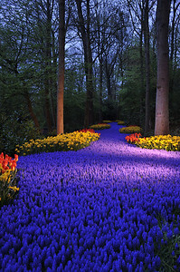 River of Hyacinths