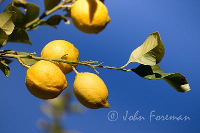 Lemons, Morocco