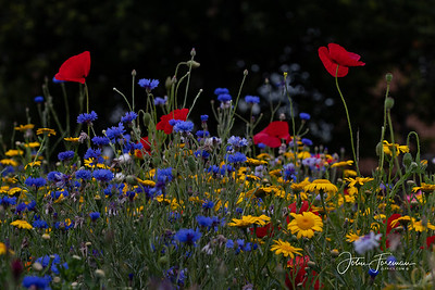 Meadow flowers, Bournemouth