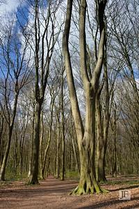 Micheldever Woods