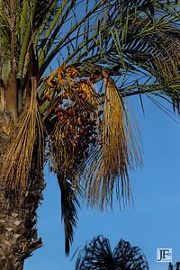 Costa Mijas