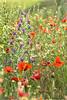 Floral composition.