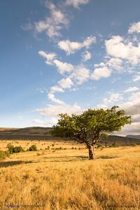 Daylight in Maasai Mara