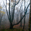 Misty Forest 2