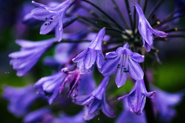 2015-08-31_Scotland_StirlingR_0568-Edit-2-Edit