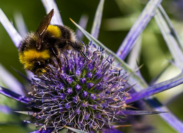 Bien og Blomsten