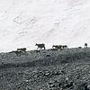 Near the Conrad Icefield