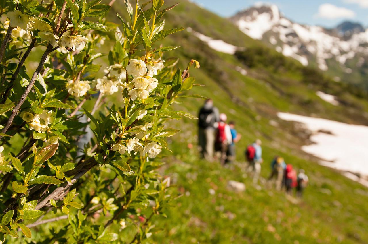 Cascade Azalia on Schatzi