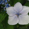 Flowers of Japan