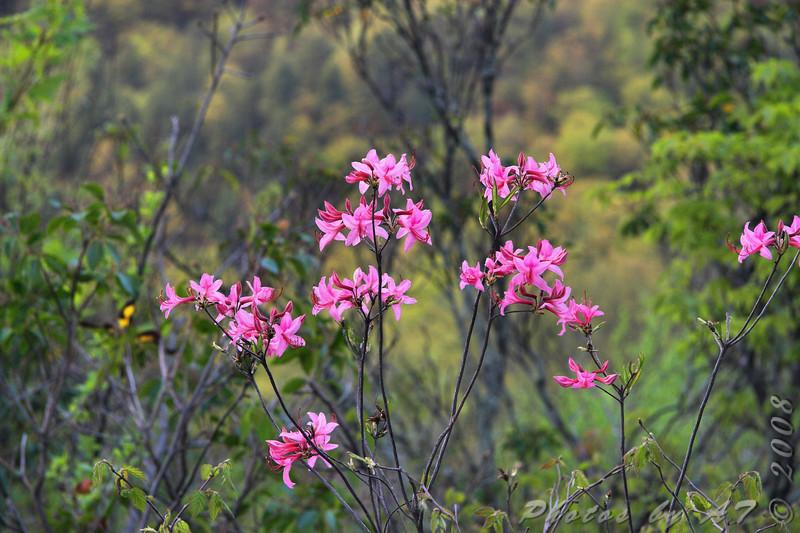 Along the Blueridge Parkway <br /> Shenandoah National Park