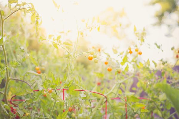 Morning sunshower