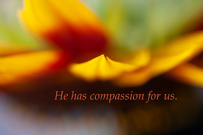 He has compassion for us_0850 copy