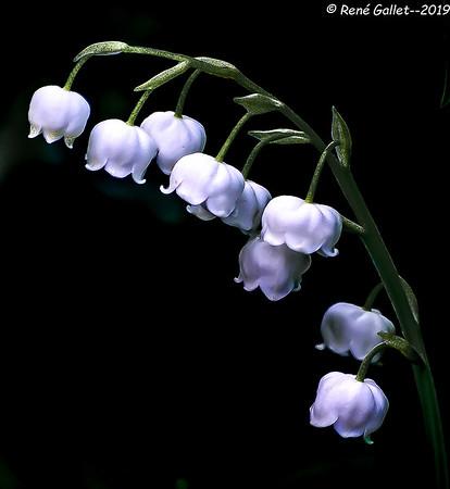 belll flowers