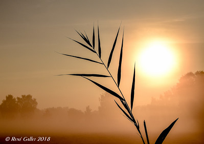 Olive Branch Sunrise