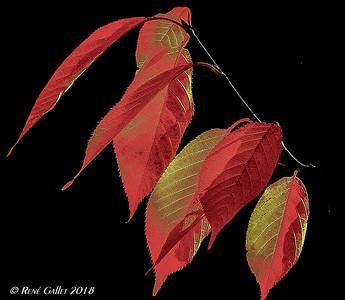 2018 leaf study 001