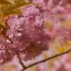 Blossom Blast