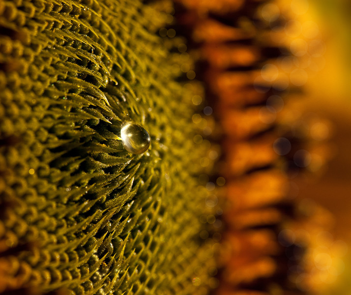 Sunflower Droplet
