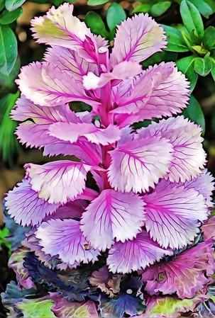 Layers of Purple Petals