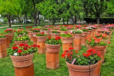 Rows of Plant Pots