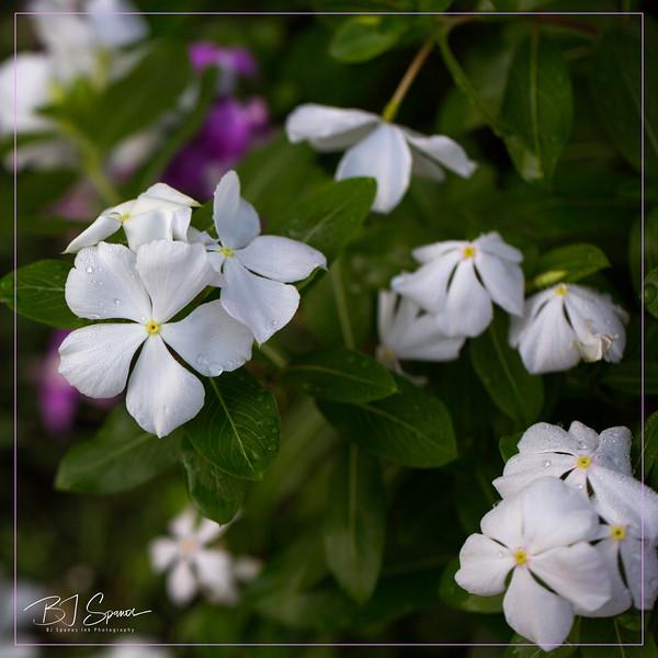 Spanos Glendalough Manor Garden-22