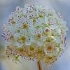 Bradford Pear BlossomHead