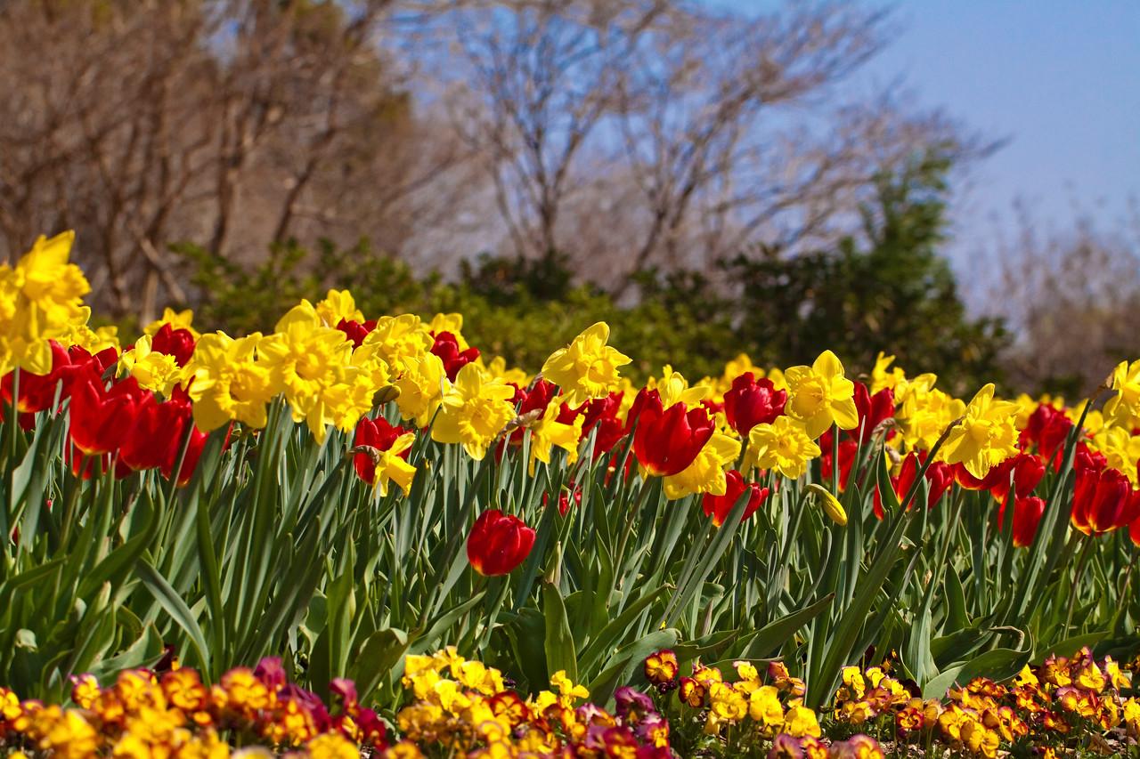 Dallas_Arboretum-0214(Spring Arrival)