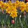 Dallas_Arboretum-0214(Spring Arrival-2)