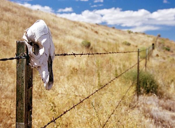 Skull on a Fencepost