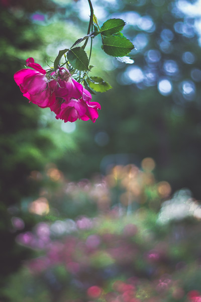 """It is only alone, truly alone, that one bursts apart, springs forth."" -Maria Isabel Barreno   #nature #clickpro #flowers"