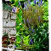 Garden with love