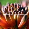 Aloe Flower view
