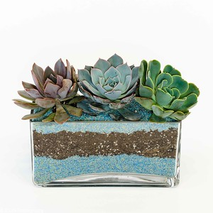 An assortment of succulents arranged in a sand filled glass rectangle vase