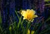 A Healing Garden