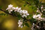 Blossoms Bright