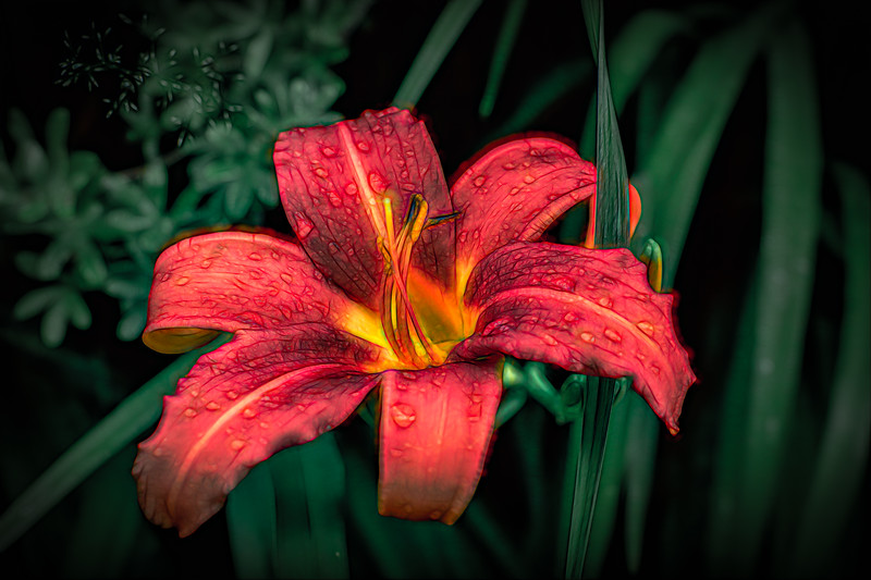 Electric Lily