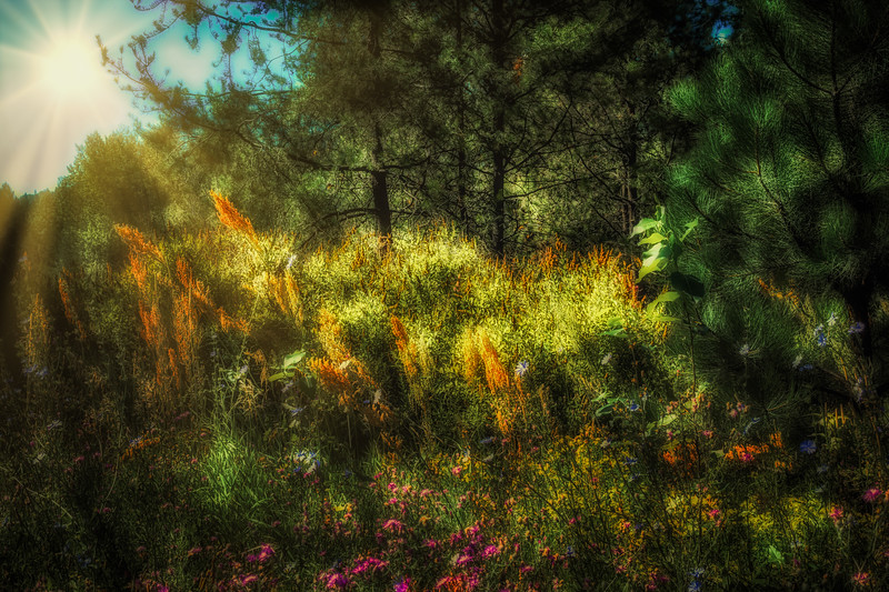 Wildflowers in the Woods