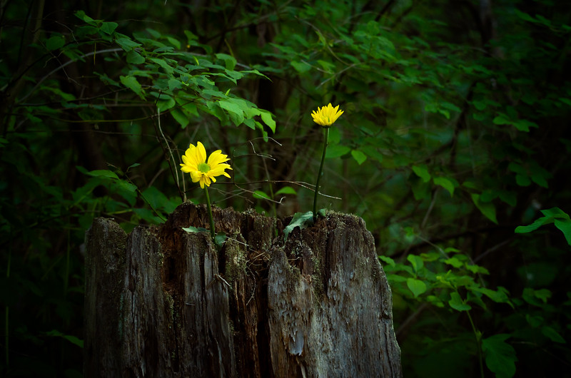 Stump Flowers