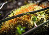 Glowing Moss