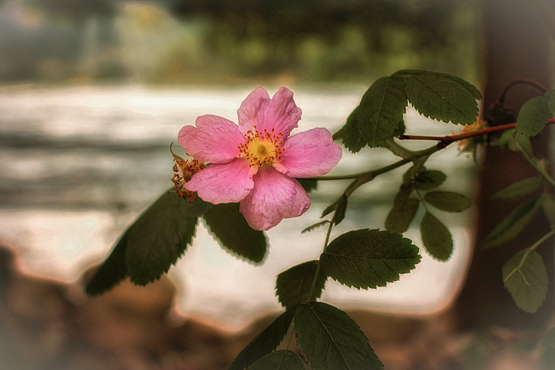 River Blossom