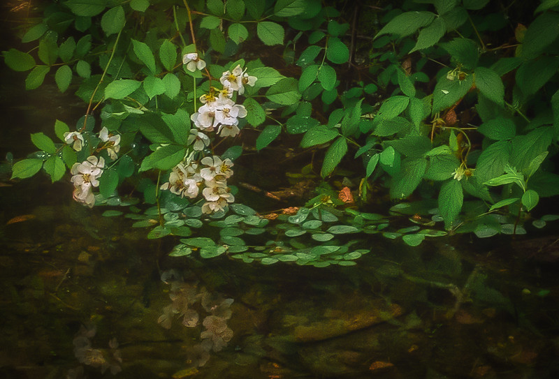 Blooms Over Water