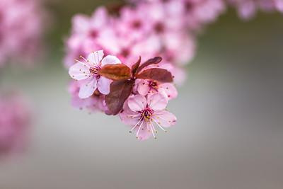 Spring Lovely