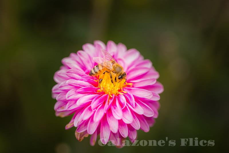 Pink Lemonade- 2