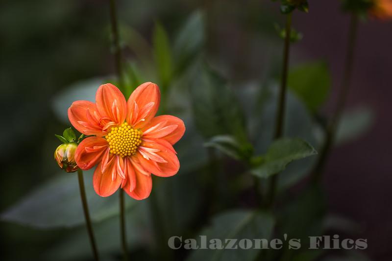 Garden Lovely- 2
