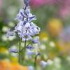 Monet in the garden