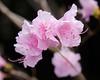 flowers  3 2020 _DSF2683