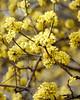 flowers  3 2020 _DSF2655