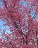 flowers  3 2020 _DSF2653