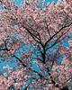 flowers  CF011082