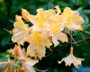 flowers  NYC 5 2020_DSF3437
